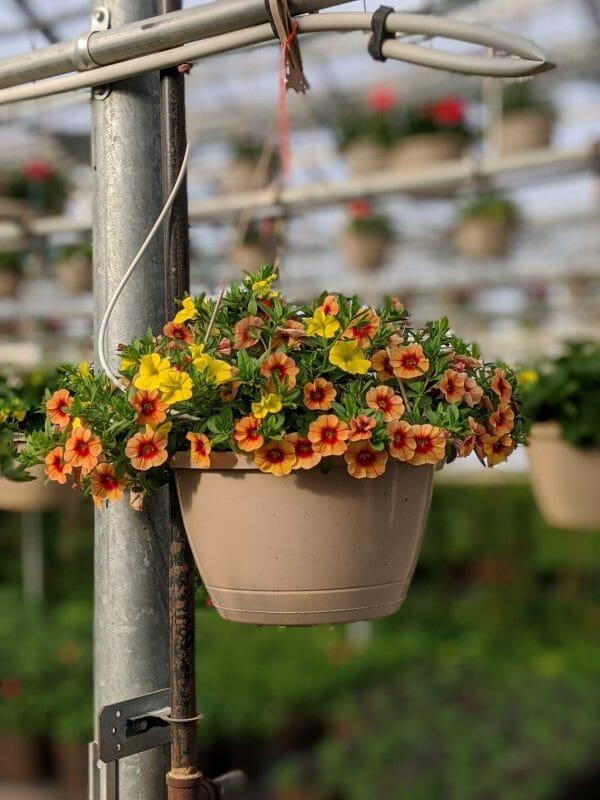 Greenhouse to Garden