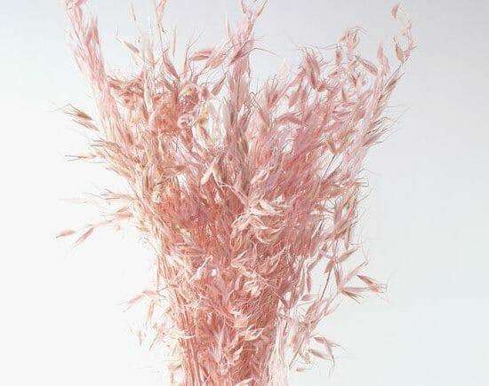 Avena Wild Light Pink