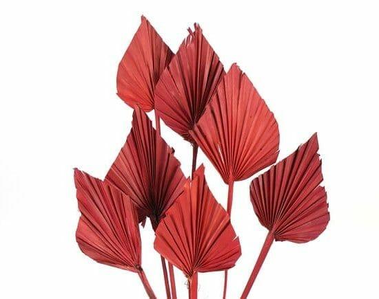 palm spear burgundy