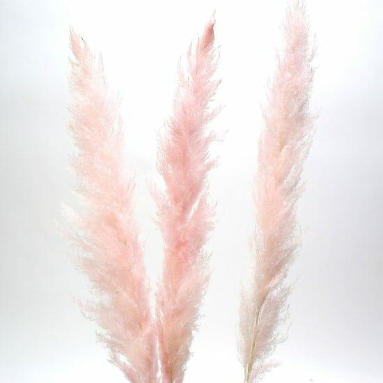 pink pampas